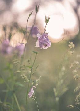 Blumen Teil 144 von Tania Perneel