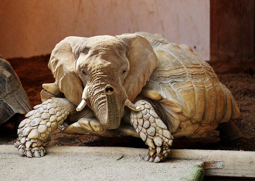 Olifant Schildpad van Sarah Richter