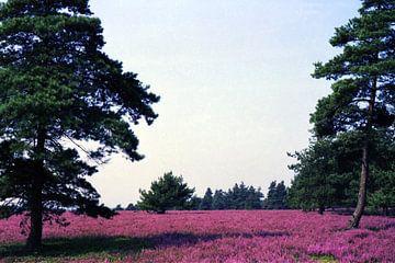 Auf der Lüneburger Heide van Joachim Serger