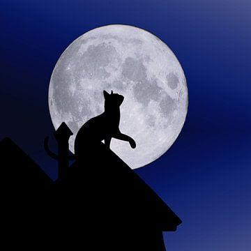 Katzenmond von Karin Schwarzgruber