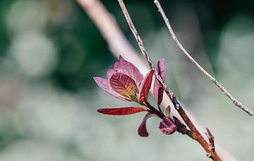 Schöne attraktive rosa Blume mit Makrolinsen fotografiert von Jennifer Petterson