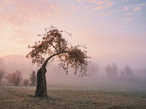 Herbstmorgen in der Ostalb von Max Schiefele