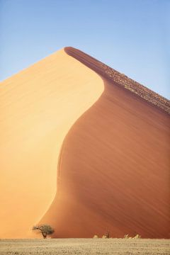 Dune 45 van Fotografie Egmond