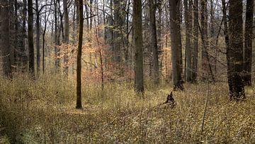 Bos in lentelicht van Severin Frank Fotografie