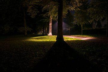 Avondwandeling in het park van Fotografiecor .nl