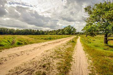 Zandweg door natuurgebied Strijbeekse Heide van Ruud Morijn