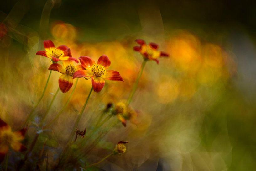 Autumn colours van Christl Deckx