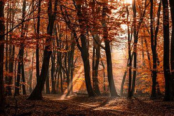 Mystischer Wald mit Sonnenharfen und Herbst färbte Blätter an einem nebeligen Morgen von Fotografiecor .nl