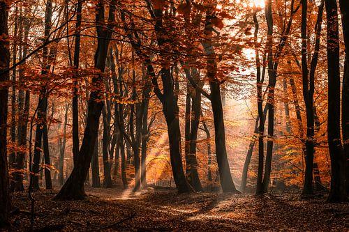 Mystiek bos met zonneharpen en herfst gekleurde bladeren op een mistige ochtend