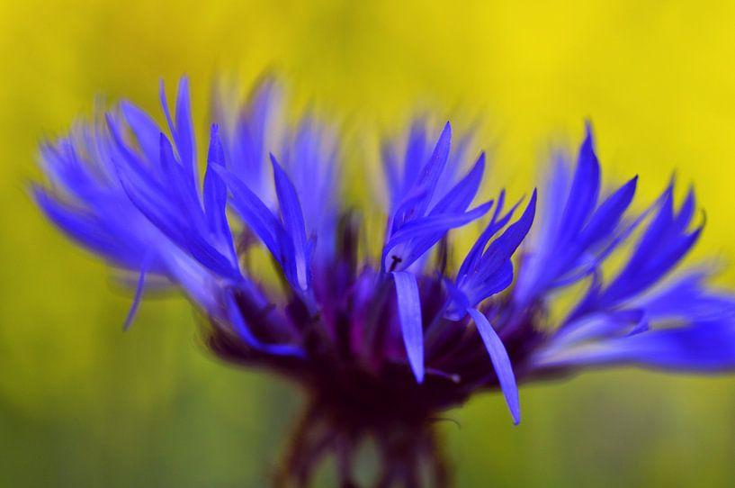 Blauwe korenbloem van Corinne Welp