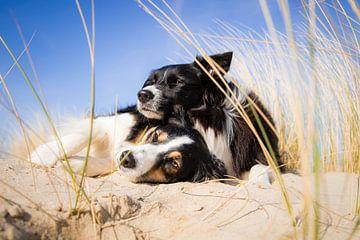 Border Collie zusjes op het strand van Pieter Bezuijen
