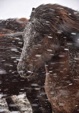 Winter in IJsland