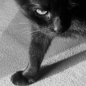 Katze von Andrea Meister