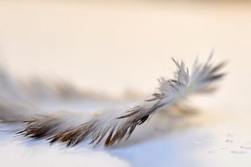 Feather von Anja Jooren