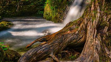 Baumstamm am Wasserfall von MindScape Photography