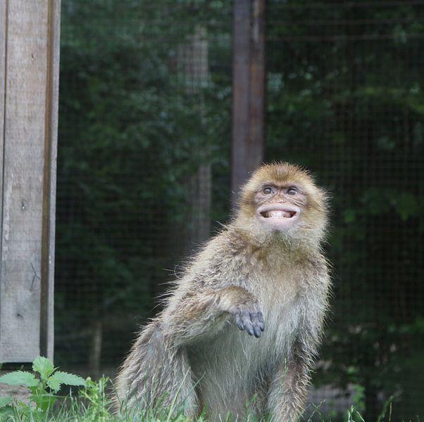 Der lächelnde Affe von Elke Dag Een Foto