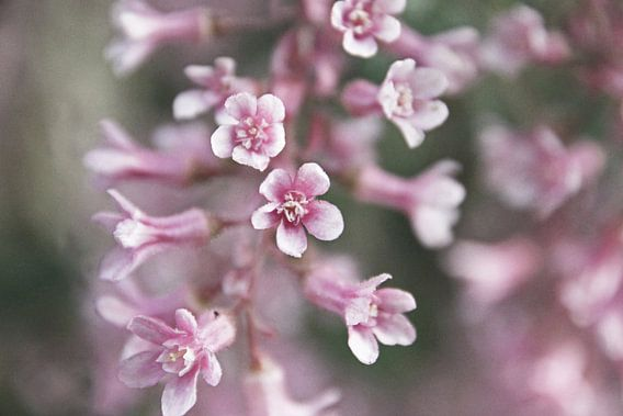 De lente komt eraan! Purple flower! van Henriëtte Kelderman-Makaaij
