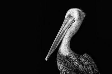 Zwart wit foto van Pelikaan tegen een zwarte achtergrond. Wout Kok One2expose van Wout Kok