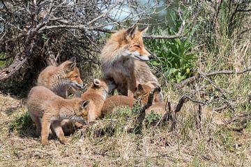 Familie Fuchs von As Janson