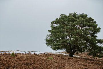 boom van Huib Vintges