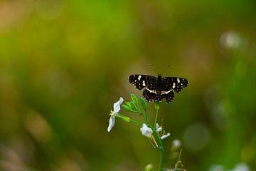 Vlinder van Silvia Rikmanspoel