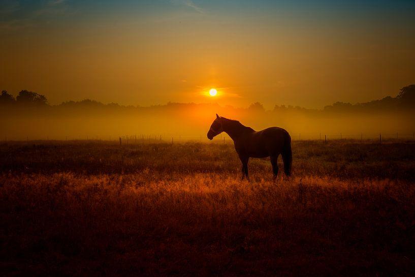 paardengeluk van Alexander Schulz