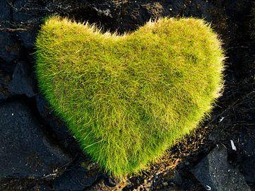 Herz aus Gras von Denis Feiner