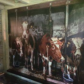 Klantfoto: Koeien in oude koeienstal van Inge Jansen, als naadloos behang