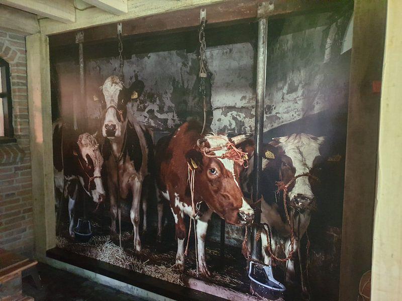 Photo de nos clients: Kühe im alten Kuhstall sur Inge Jansen