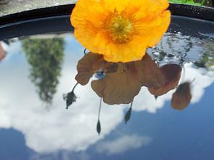 bloem weerspiegeld in water