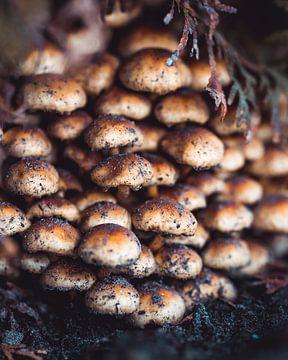 Champignons au ras du sol sur Pim Haring