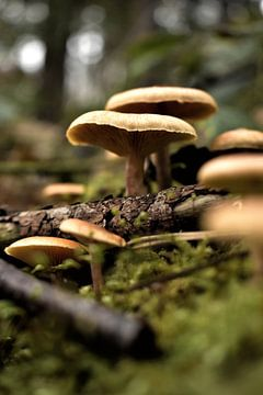 paddenstoel dorp van Marvin Van Haasen