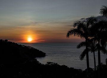 Zonsondergang met palmboom van Bianca ter Riet