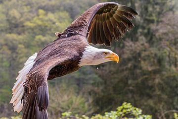 Fliege wie ein Adler von Jan Hoekstra