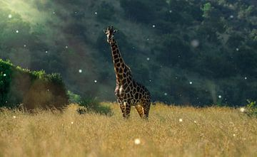 Giraffe in Südafrika von Sanne Dost