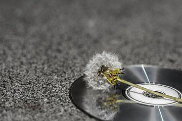 Uitgebloeide CD van Foto van Anno