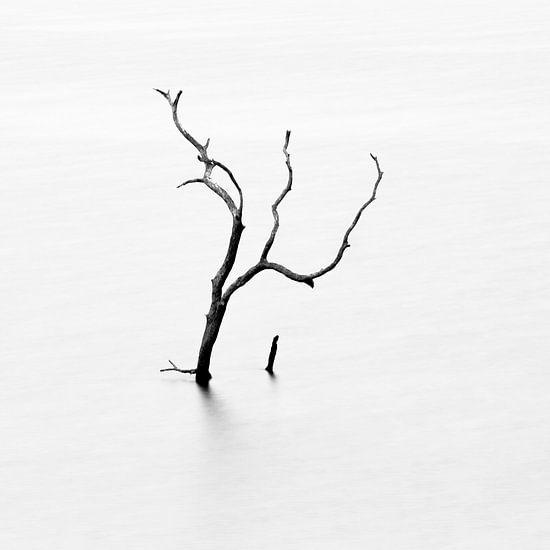 Dode boom in meer van Johan Zwarthoed