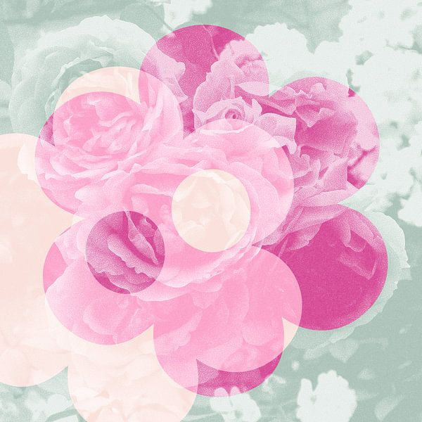 Liefde van de bloemrozen: roze, munt en zalm