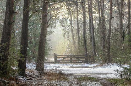 Smeltende sneeuw in de Laurabossen