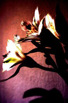 Fleur op van Monique Brouwer