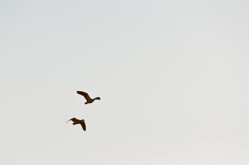 de ganzen trekken naar het zuiden van Bas Wolfs