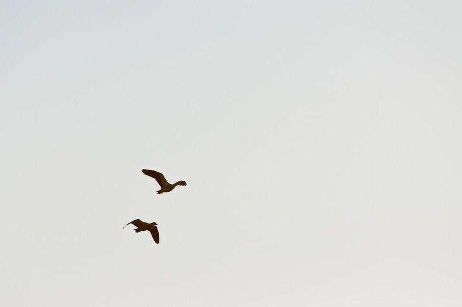 de ganzen trekken naar het zuiden