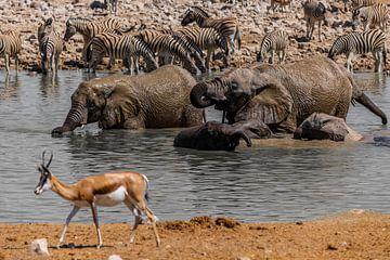 Wasserloch in Namibia van