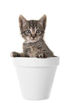 Tuin Kitten van Elles Rijsdijk
