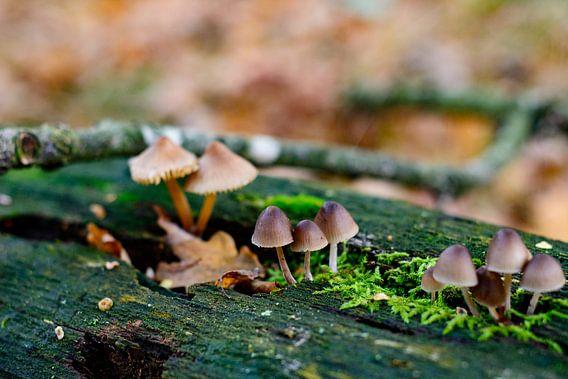 Herfst in detail van Ivon Hamers