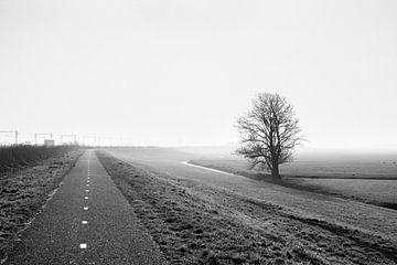 Polder in de Mist van