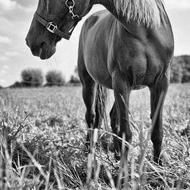 Pony van Mariska Hofman