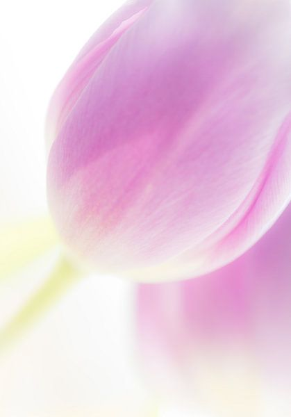 Tulips in high key 3 van Greetje van Son