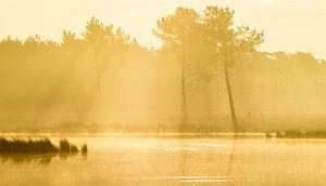 Strabrechtse Heide 195