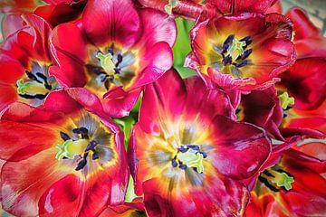 Verblaßte Tulpen. von Marianne Twijnstra-Gerrits
